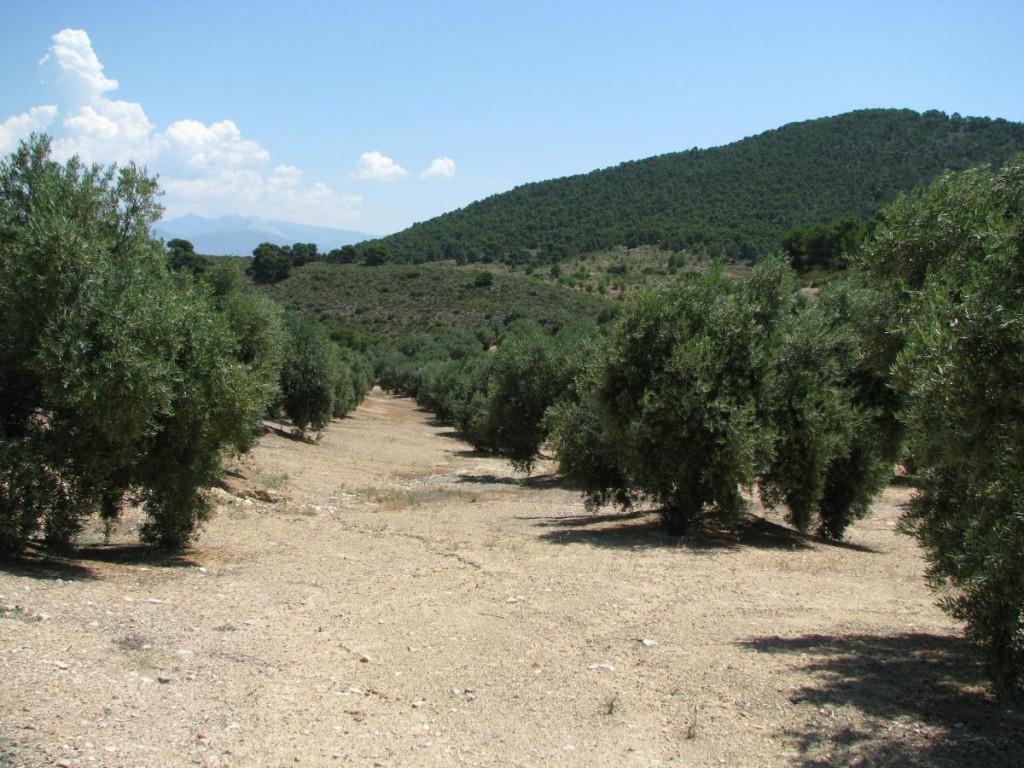 ASAJA-Jaén valora el inicio del pago del anticipo de la PAC
