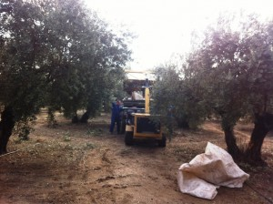 agricultor activo 2 (1)
