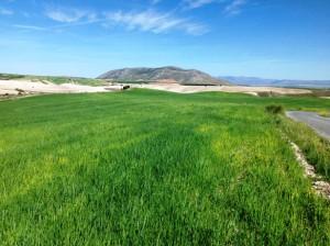 campo de cebada