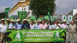 manifestación ganadería en Sevilla