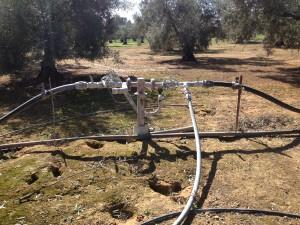 riego olivar (1)