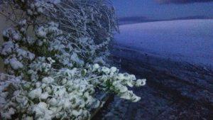 olivar nieve 3