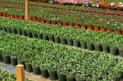 Consejería de Agricultura inmoviliza 592.000 plantones de frutales en inspecciones de viveros clandestinos