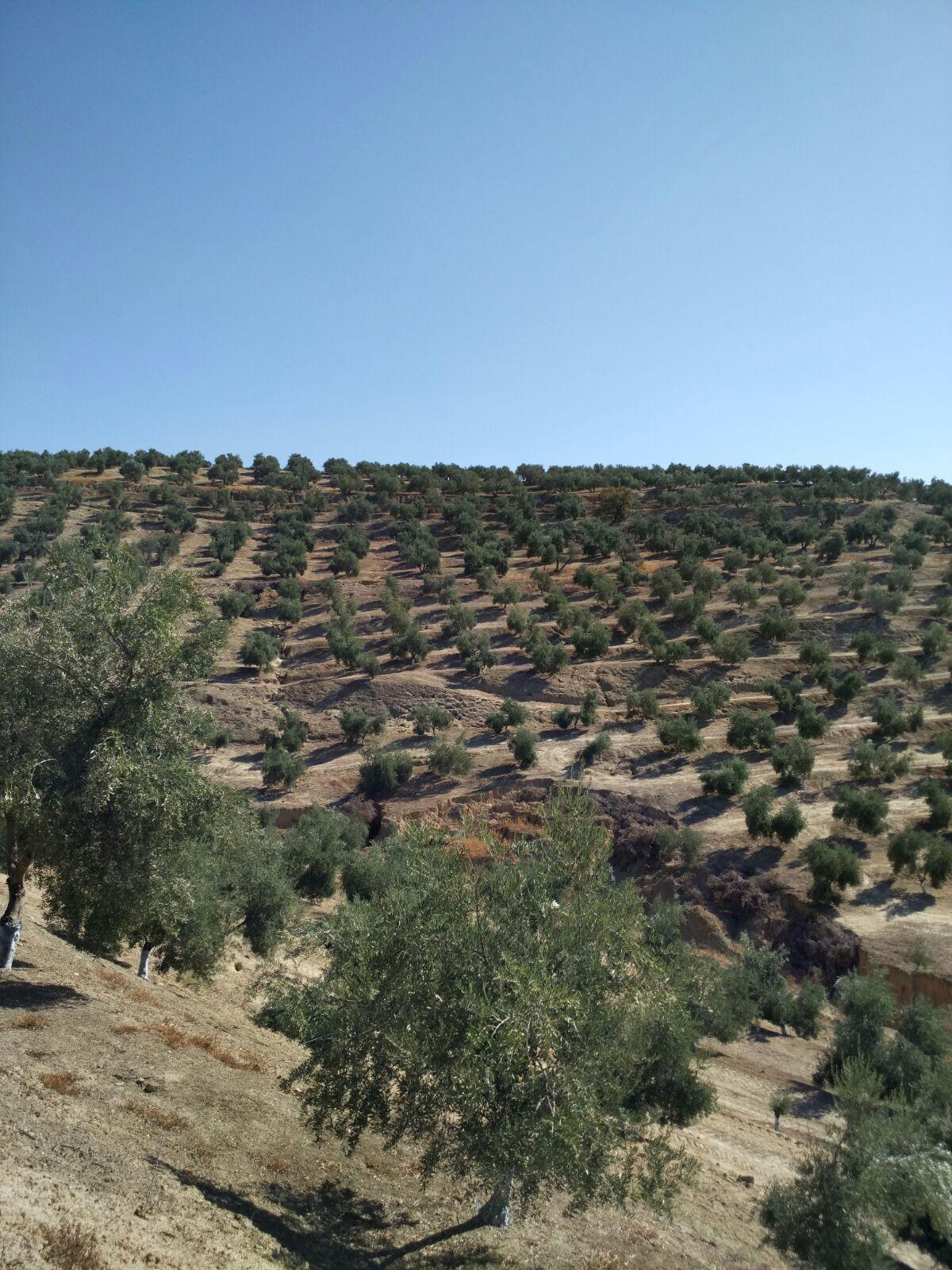 ASAJA-Jaén valora el acuerdo sobre el Impuesto de Sucesiones en Andalucía, que eleva hasta un millón de euros el mínimo exento para los herederos directos