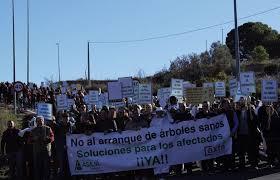 Los agricultores alicantinos afectados por Xylella se manifiestan