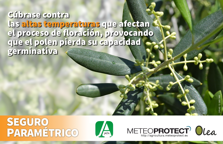 https://www.asajajaen.com/actualidad/asegure-olivar-golpe-calor-floracion-personalice-seguro-segun-necesidades#more-14733