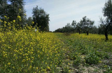 Andalucía lidera el número de solicitudes PAC