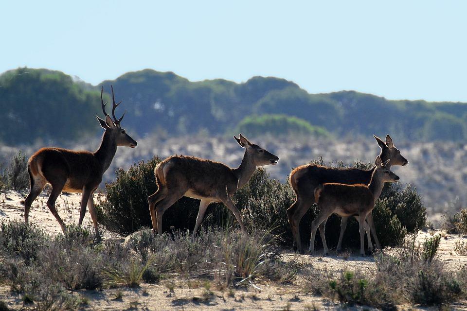 ¿Qué se debe hacer cuando se ven en el campo o bosque animales silvestres enfermos?