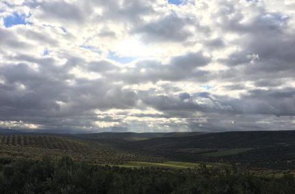 El MAPA prepara la autorregulación del olivar