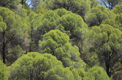 La Junta amplía el plazo para solicitar las ayudas forestales